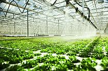 Тепличные системы: отопление, орошение, микроклимат итд