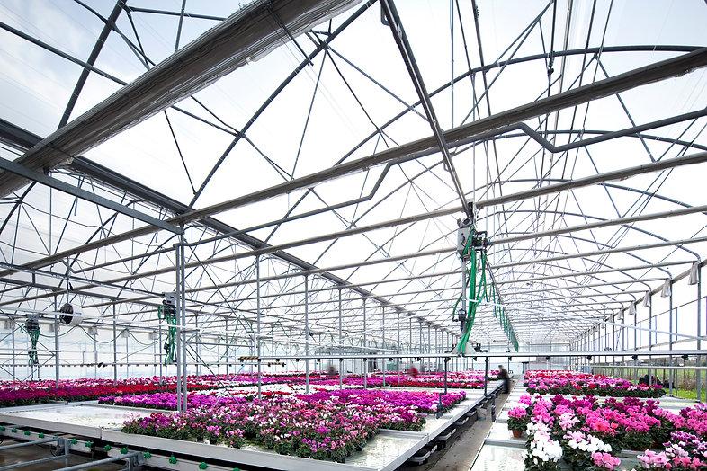 Блочная многопролетная теплица и цветы