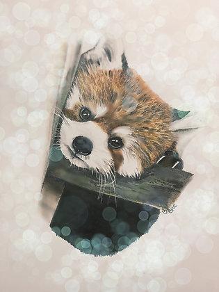 PRINT - Red Panda