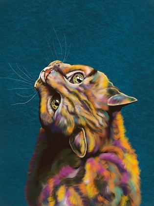 Rainbow Pussy