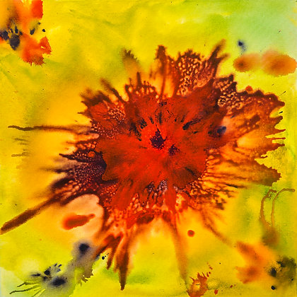 Bio Bloom – Poppy II, Original Painting