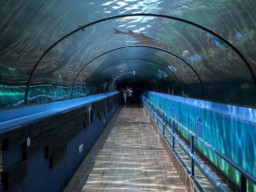 Surreal Sea Life Aquarium by Natasha S.