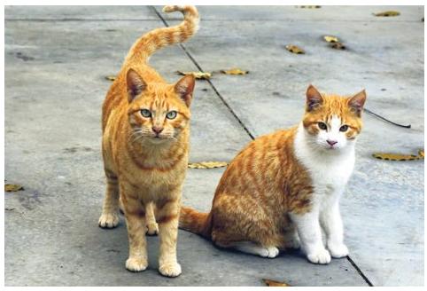 Council tries herding cats by Gabe Merkel, Alt Media Newspaper (Sydney)
