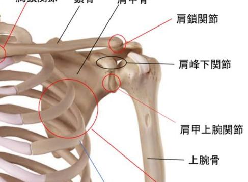 肩関節について①