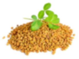 Herb-Fenugreek-w-seeds-Fotolia_108724794_Subscription_Monthly_XL1.jpg