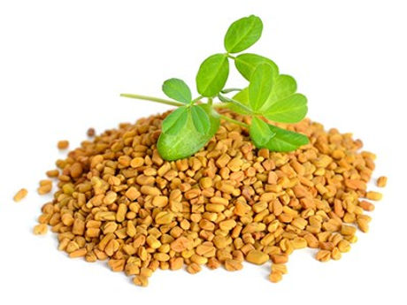 Herb-Fenugreek-w-seeds-Fotolia_108724794_Subscription_Monthly_XL1.jpg