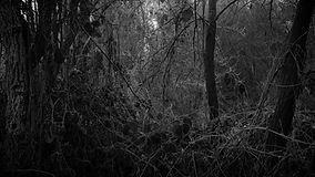 Murmur_Locus-Demeulenaere_03.jpg