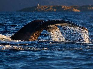 whale watching 海上观鲸
