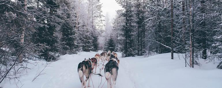 WintermoonStock-medium.jpg