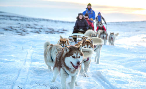 small-768px-dog-sledding-3.jpg
