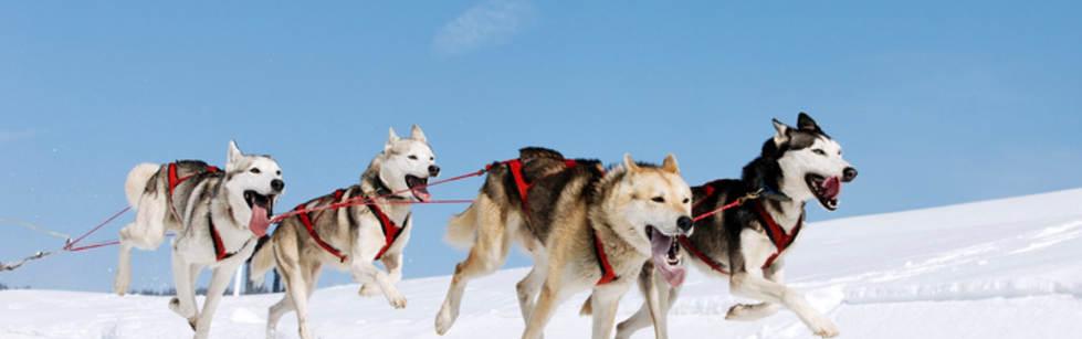 Dog-Sledding-1500x609.jpg