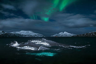NorthernLight in Sea