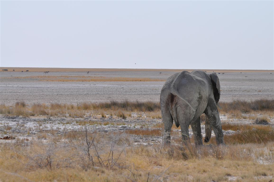 ETOSHA NATIONAL PARK(Medium)