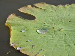CROCIERA SUL YELLOW WATER BILLABONG