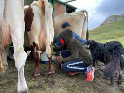 AGRITURISMO MALGA VALLE DELL'ALPE
