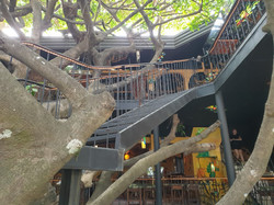 TREE HOUSE RESTAURANT & CAFÈ