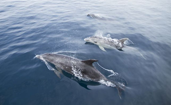 Dolphins-01-1600x395.jpg