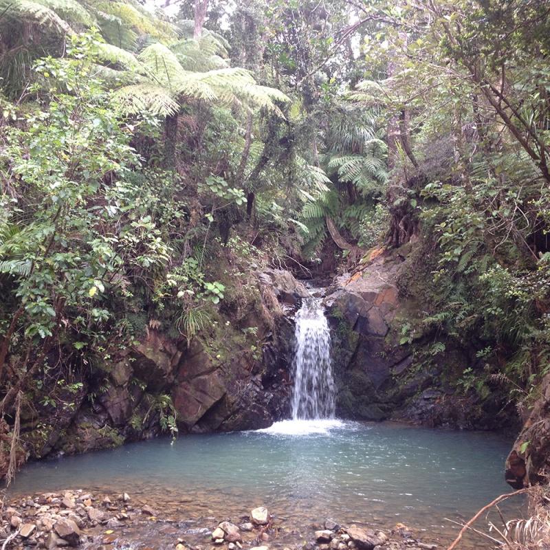 Kauri Falls