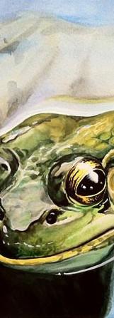 watercolor_art_frog.jpg