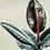 Thumbnail: BURGUNDY RUBBER PLANT