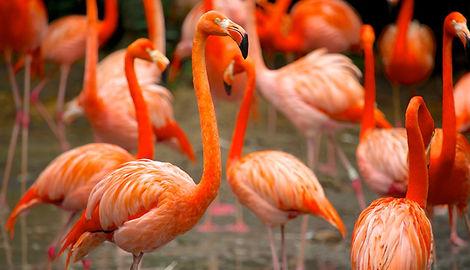 38592-Jurong-Bird-Park.jpg