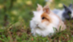 chan-swan-481016-unsplash_edited.jpg