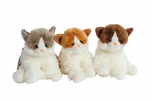 Katter.jpg
