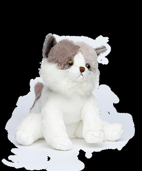 Katt Kitty