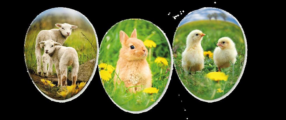 Påskägg - Young animals