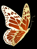 Butterfly-element.png