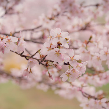 A Mindfulness Shift Into Spring