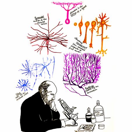 Santiago Ramon y Cajal: father of modern neuroscience