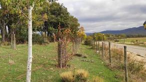 Finalizamos las actuaciones del Proyecto ReforestaAcción
