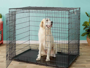 5 Tips to Acclimating Your Pet to their Crate