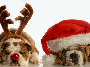 7 Ways to Make the Holidays Safer for Your Pets