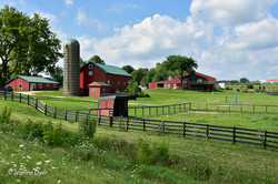 Horse Barn on Route 50-7946
