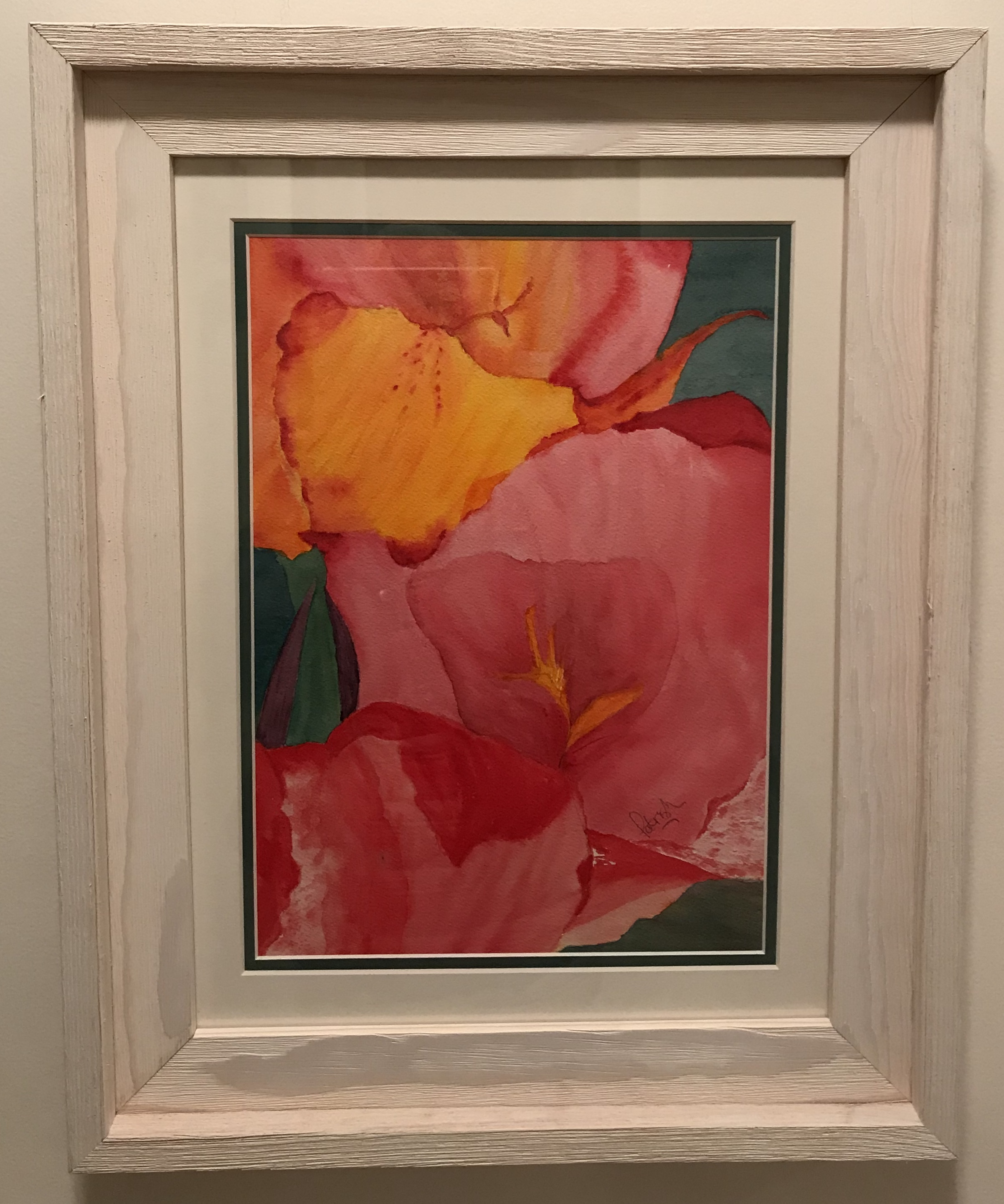 Florida Cana Lily