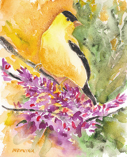 Goldfinch Pink Flowers