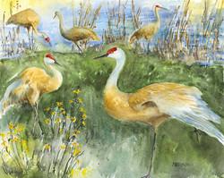 Sandhills Marsh