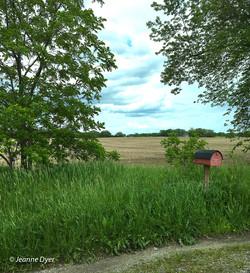 Rural Mailbox-1730