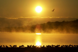 Foggy Flock of Seagulls