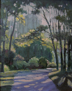 Woods Dawn