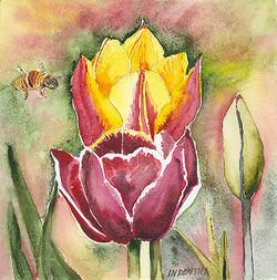Bee Tulip