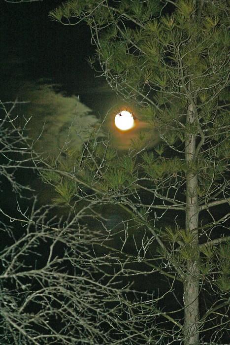 bella_luna