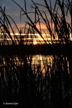 Sunset Vertical-9043