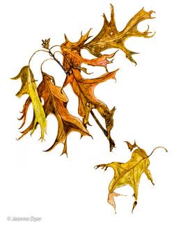 Pin Oak Leaves-0148