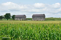 Twin Barns in Linn-7980