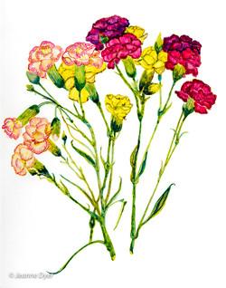 Carnations-0147