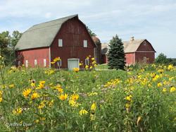 Barns and Wildflowers-0896