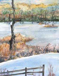 Blk Crown Marsh
